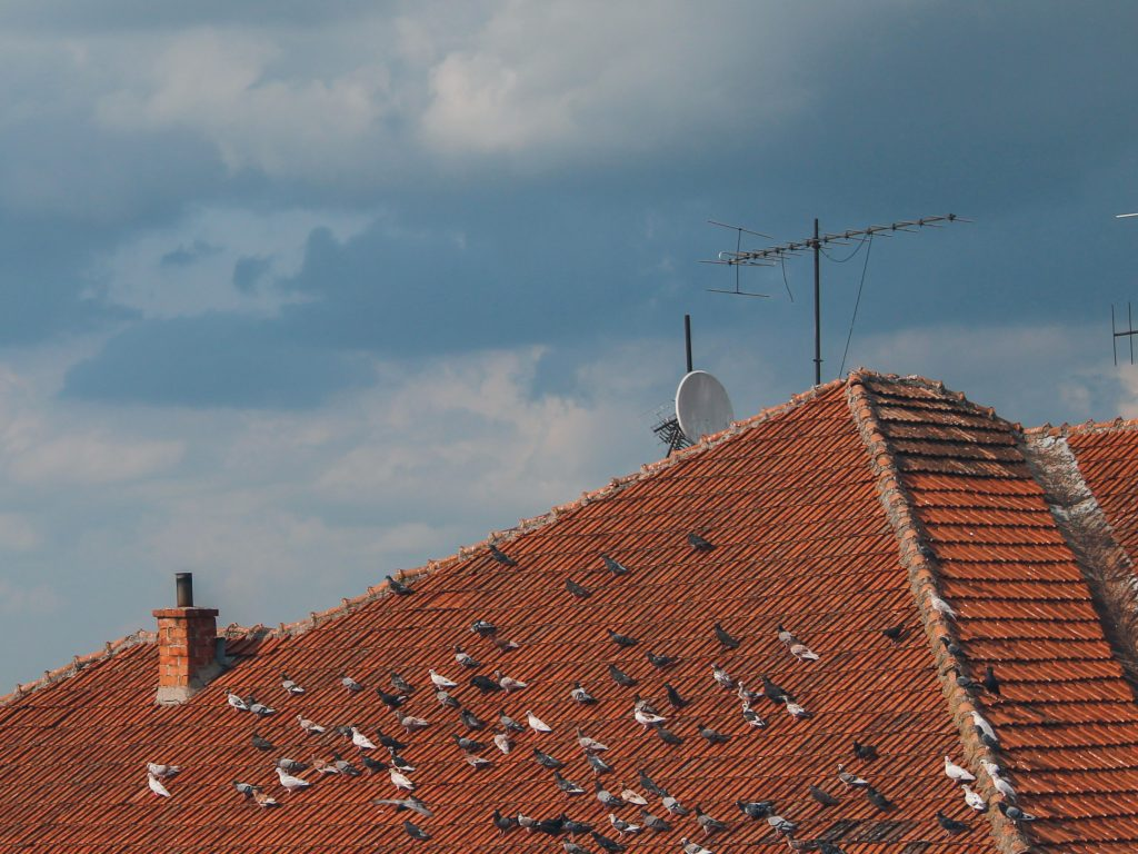 obby rh M2WcoqJgkPg unsplash 1024x768 - How To Find The Best Professional For Your Roof?