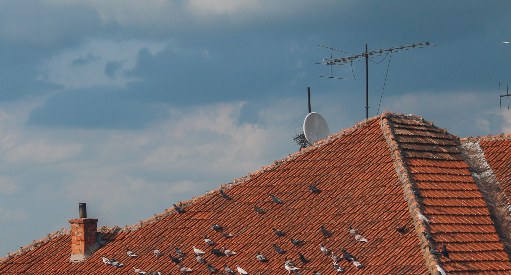 obby rh M2WcoqJgkPg unsplash 1950x1050 - How To Find The Best Professional For Your Roof?